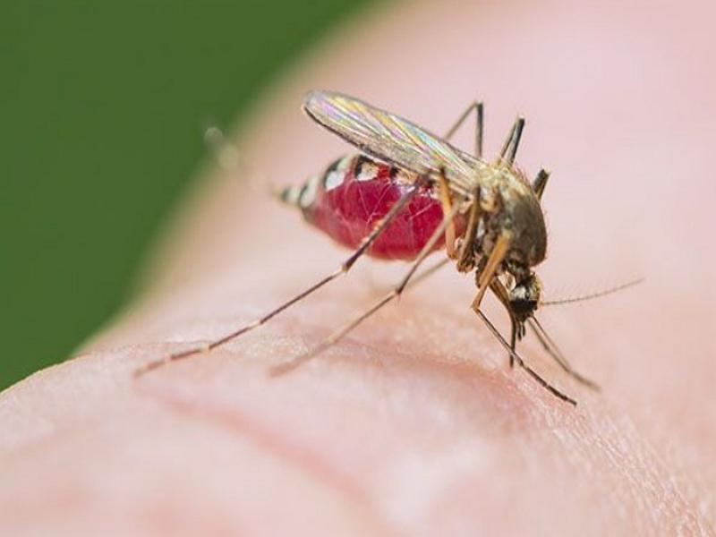 ▶광명시, 지카 바이러스 및 진드기 매개 감염 주의▶광명시민대상 후 보자 8월31까지 접수